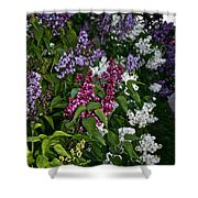 Winning Color Shower Curtain by Susan Herber