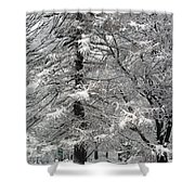 Winter 0001 Shower Curtain