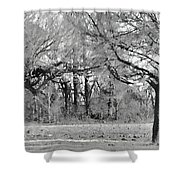 Winter At The Edge Of The Woods Shower Curtain
