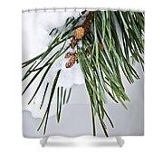 Winter Branches Shower Curtain by Elena Elisseeva