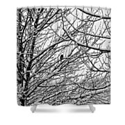 Winter Chickadee Shower Curtain
