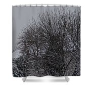 Winter Cold Branches Shower Curtain