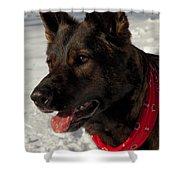 Winter Dog Shower Curtain