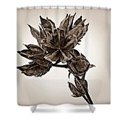 Winter Dormant Rose Of Sharon - S Shower Curtain