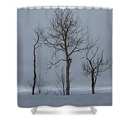 Winter Elegance Too Shower Curtain