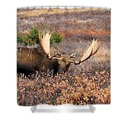 Winter Feed Shower Curtain