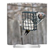 Winter Feeding Shower Curtain