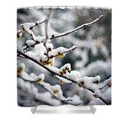 Winter Fleurs Shower Curtain