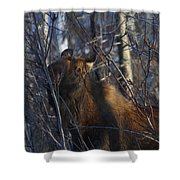 Winter Food Shower Curtain