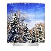 Winter Forest Under Snow Shower Curtain by Elena Elisseeva