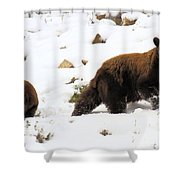 Winter Guide Shower Curtain