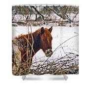 Winter Horse Landscape Shower Curtain