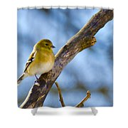 Winter Morning Song Bird Shower Curtain