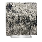 Winter Trees Covered In Ice Shower Curtain