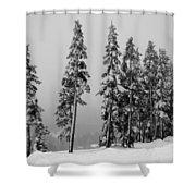 Winter Trees On Mount Washington - Bw Shower Curtain