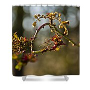 Winter Wild Rose Heart Shower Curtain