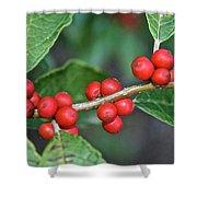Winterberry Shower Curtain