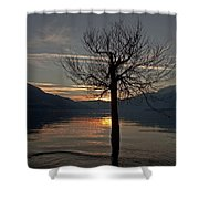 Wintertree In The Evening Shower Curtain