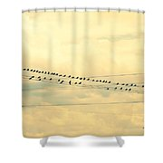 Wires With Many Birds On Them Shower Curtain