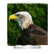Wisconsin Bald Eagle Shower Curtain