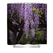 Wisteria Droplets Shower Curtain