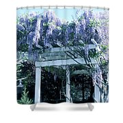 Wisteria In Bloom  Shower Curtain