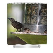 With A Song In My Heart Shower Curtain