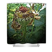 Withered Away Shower Curtain