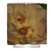Withering Rose Shower Curtain