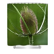 Without Petals Shower Curtain