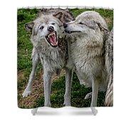 Wolf Confab Shower Curtain