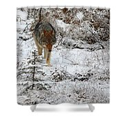 Wolf On The Prowl Shower Curtain