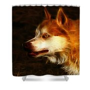 Wolf Or Husky - First Place Win In 'angry Dog Contest' Shower Curtain