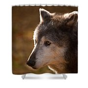 Wolf Outlined By The Sun Shower Curtain