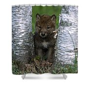 Wolf Pup Playing Peekaboo Shower Curtain