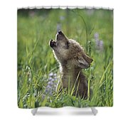 Wolf Puppy Howling In Mountain Meadow Shower Curtain