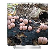 Wolf's Milk Slime Mold - Lycogala Epidendrum Shower Curtain