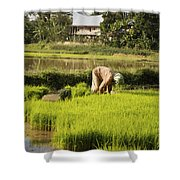 Woman Planting Rice Shower Curtain