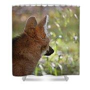 Wondering Wolf Shower Curtain
