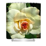 Wonderland Rose Shower Curtain
