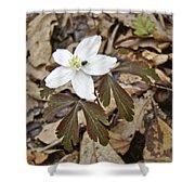 Wood Anemone - Anemone Quinquefolia Shower Curtain