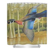 Wood Duck Flying Shower Curtain