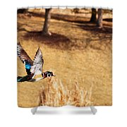 Wood Duck In Fflight Shower Curtain