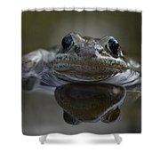 Wood Frog  Rana Sylvatica Shower Curtain