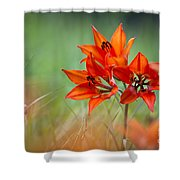 Wood Lily Shower Curtain