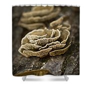 Wood Shrooms Shower Curtain