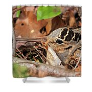 Woodcock Nesting Side View Shower Curtain