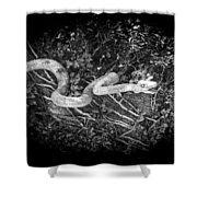 Wooden Snake Shower Curtain