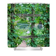 Wooden Trellis And Vines Shower Curtain