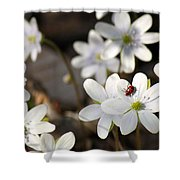 Woodland Flora And Friend Shower Curtain